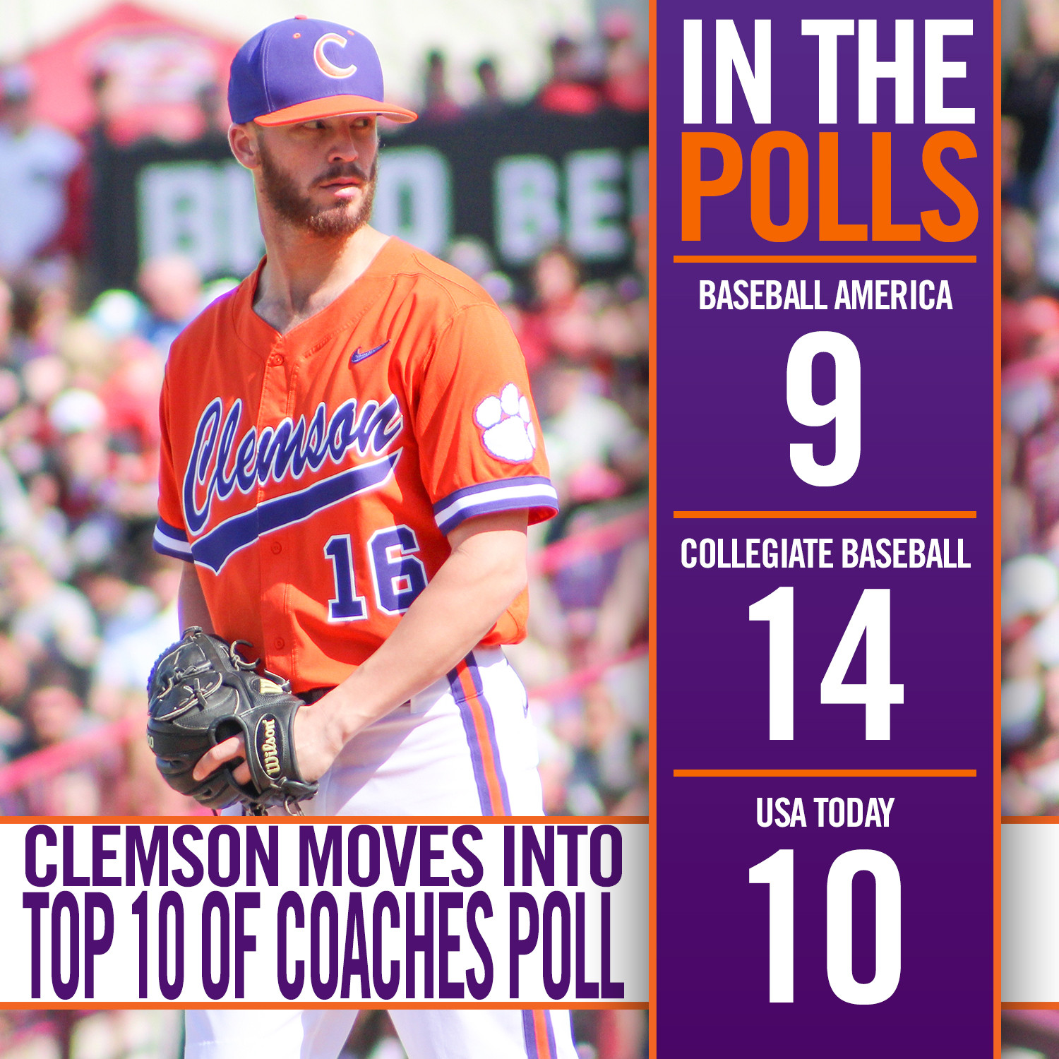 Tigers Remain Strong in Polls